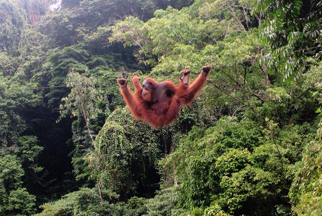 Bukit Lawang, Gunung Leuser National Park, North Sumatra, Indonesia