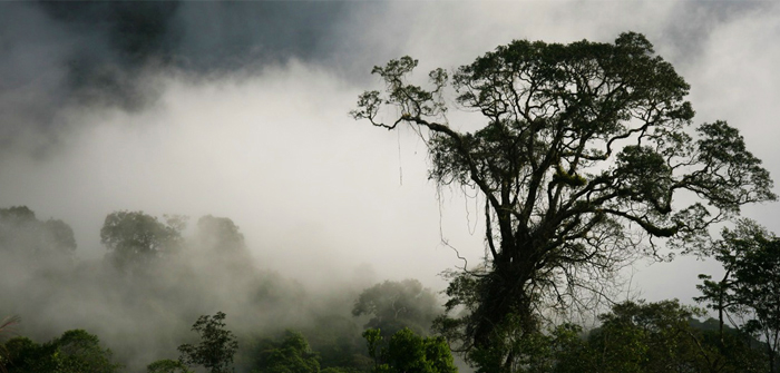 Kayan Mentarang National Park, North Kalimantan, Indonesia