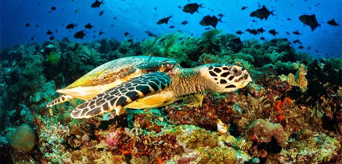 Bunaken Marine National Park, North Sulawesi, Indonesia