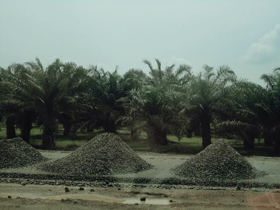 Palm oil plantation in North Sumatra, Indonesia