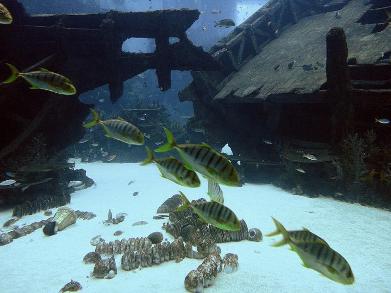 Shipwreck habitat in S.E.A. Aquarium Sentosa