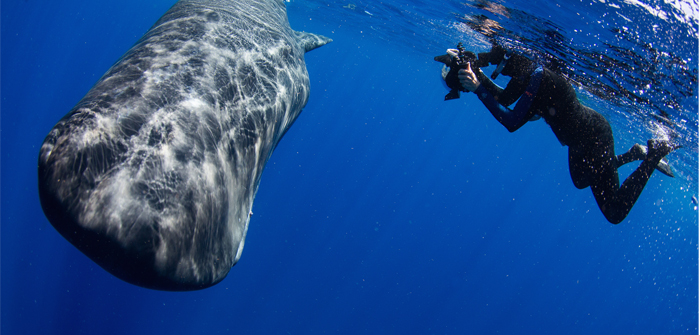 Swimming with Whales, Dominica