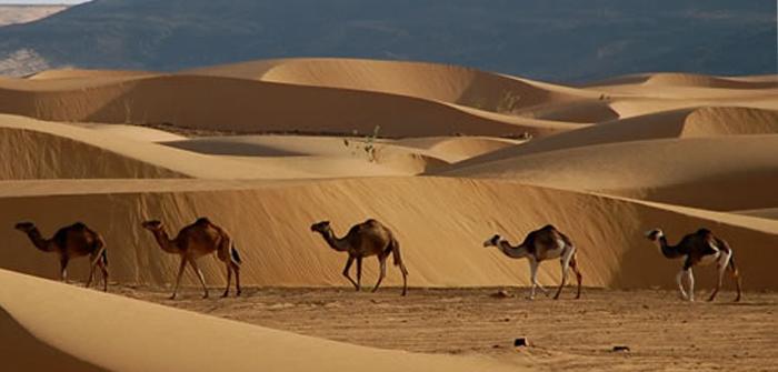Desert Safari, Mauritania