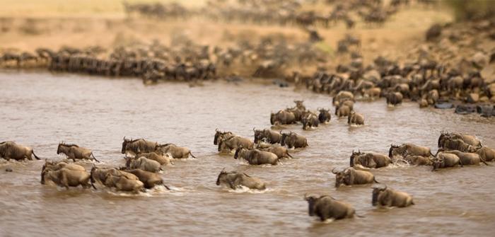 Great Wildebeest Migration, Tanzania